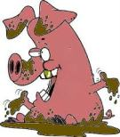 pig-cartoon